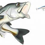 海のルアーターゲット釣りシーズン一覧表 これで釣れる魚がわかる
