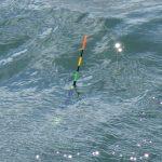 チヌ釣り仕掛け フカセ釣りでアーマードPEラインを使ってみた!